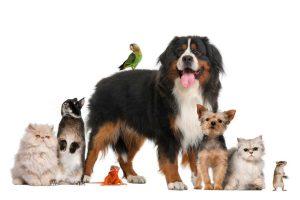 Intoxicación animales